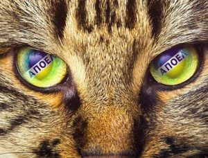apoel_cat_eyes